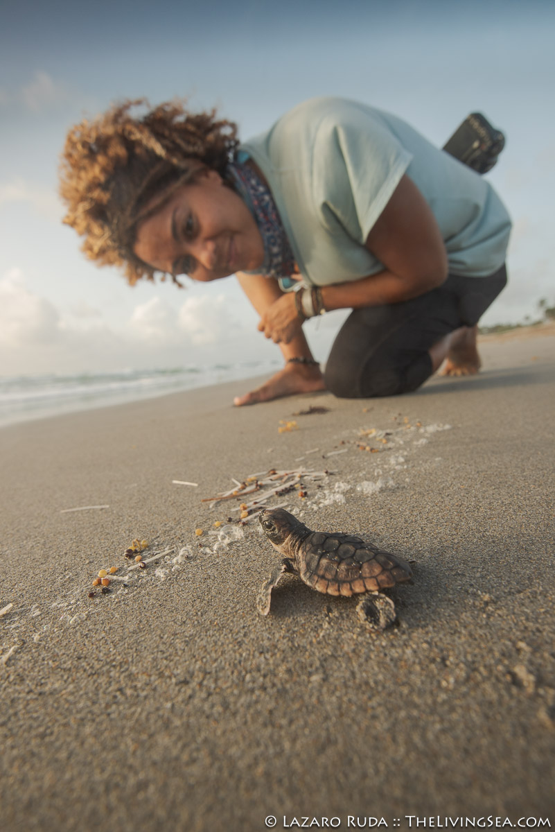Andrea Whitaker, Cheloniidae, Laz Ruda, Lazaro Ruda Wildlife Photographer, MARINE LIFE, Reptiles, Reptilia, Sea Turtles: Testudines, TheLivingSea.com, West Palm Beach, [LOCATION], baby, baby sea turtle, beach, endangered, endangered species, hatchling, juvenile, loggerhead turtle: loggerhead: Carreta carreta, marine, ocean, sand, sunrise, underwater, underwater photo, vertical, wide angle, young